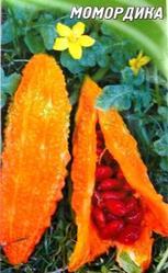 момордика - оранжевый огурец