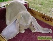 хочу купить кроликов следующих пород