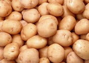 Семенной картофель в Житомире (оптом)