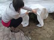 Геотекстиль для сада