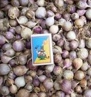 ОДНОЗУБКА (однодоля,  однозубок) элитные семена чеснока « Софиевский