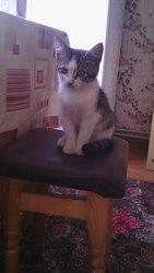 Красивая кошечка ищет добрые руки! г. Олевск
