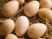 куплю інкубаційне яйце бройлера