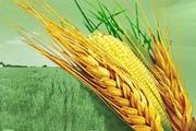продам зернові
