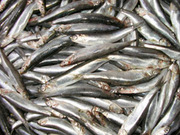 Рыба из первых рук,  от производителя