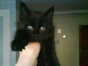 Котенок срочно в хорошие руки Житомир